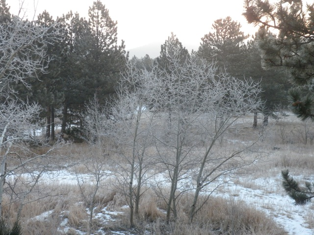 Rocky Mountain morning frost on Christmas Eve 2010